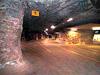 Крупное древнее захоронение животных найдено под Воронежем